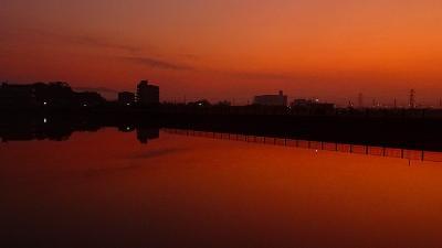 早朝散歩 久しぶりの早朝散歩は安倉上池 上巻。