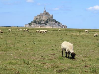 羊とモンサンミッシェル