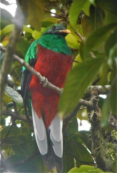 サン・ホセへの道 熱帯雨林の宝物たち、セロ・デ・ラ・ムルテ 18