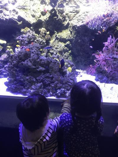 姪っ子&甥っ子と行く品川アクアパーク