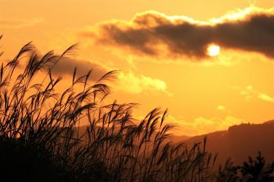 金色に輝く絶景の曽爾高原と全10品の焼き松茸、松茸すき焼き、松茸土瓶蒸し♪前回との比較検証も