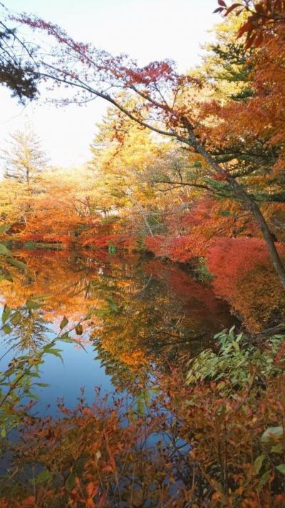 旧軽井沢「ホテル音羽ノ森」に泊まり紅葉を楽しむ1泊2日(2)