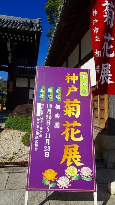 神戸市立相楽園 第68回神戸菊花展 その2。