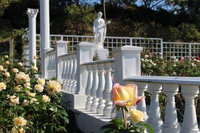 ばら苑と古民家をまわって秋を感じる、2019年の生田緑地ばら苑は11月10日までです