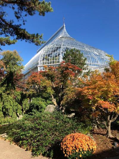 ピッツバーグ!大学エリアのフィップス温室植物園は菊が満開!!