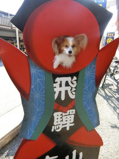①東京から飛騨高山へ_秋の3連休パピヨンみっくの犬旅
