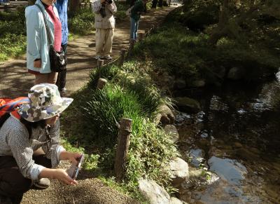Japan コミュニティー・ウォーキング シリーズ(24) 根川緑道と石田倉庫のお祭り