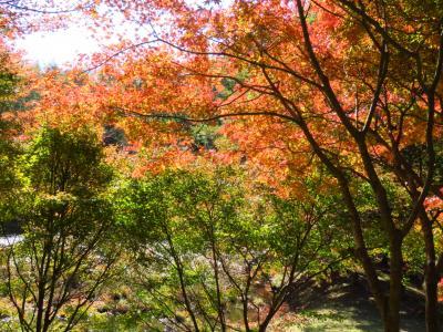 茶臼山から香嵐渓紅葉