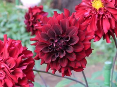 秋の神代植物公園 百花繚乱はバラだけじゃなかった
