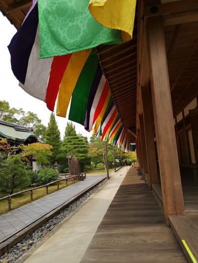 京都南座新開場前!10月の京都。智積院、東福寺、京都国立博物館