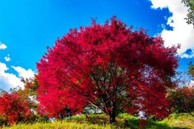 用作公園の紅葉下見 2019