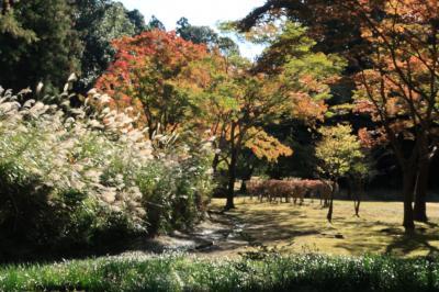 秋を感じに偕楽園・もみじ谷へ
