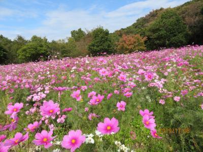 花いっぱい・・淡路島です。