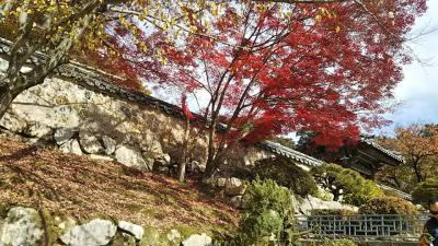 紅葉を求めて。釜山・慶州  初めてのひとり旅(ちょっとドキドキ)①