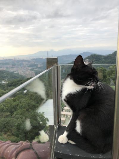 台湾リピーターが行く!天空猫空の絶景&B級グルメ食べ歩き♪♪ 35年ぶり・・親友との台北旅