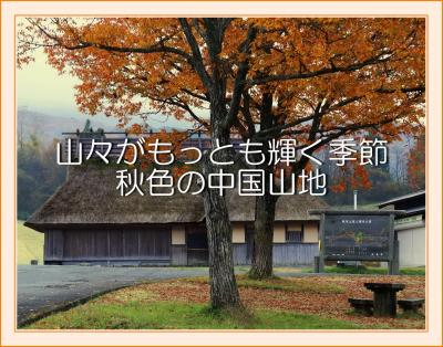 Solitary Journey[2004]山肌の草木や樹木が最も輝く季節です。<八幡高原&筒賀の大銀杏&もみのき森林公園>広島県北広島町