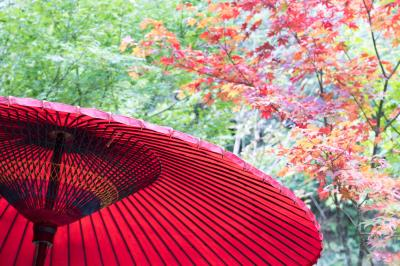 2019 鎌倉の秋 一条恵観山荘