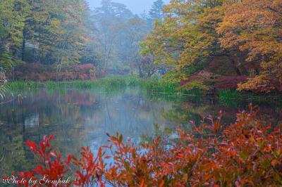 アッシー君として駆り出され、軽井沢へ(2)雲場池の紅葉&ちょこっと懐古園へ