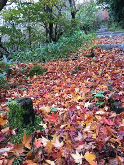 九州一早い紅葉と温泉を求めて久住へ ー 牧ノ戸峠 ー