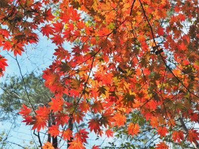 心和む紅葉ハイキング 牛ノ寝通りから小菅の湯へ
