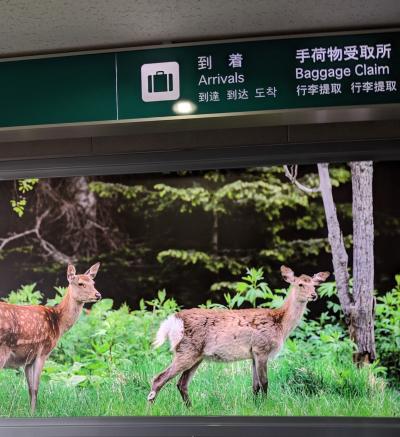 2019.10月末 鹿におびえ続けた道東ドライブ旅行②(納沙布岬、厚岸)