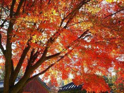 紅葉のソウルは美しく寒かった