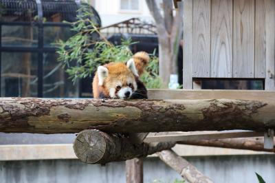 癒されたよ小さな動物達に入場無料野毛山動物園で 11月/2019