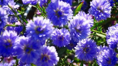 尼崎市 西武庫公園に咲く花 その4。