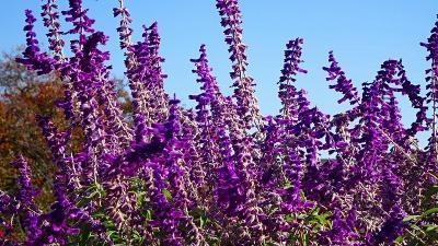 尼崎市 西武庫公園に咲く花 その5。