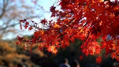 晩秋の裏磐梯、そしていわきへ