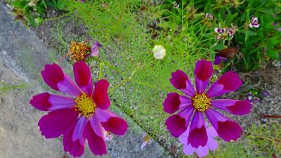 尼崎市 西武庫公園に咲く花 その8完。