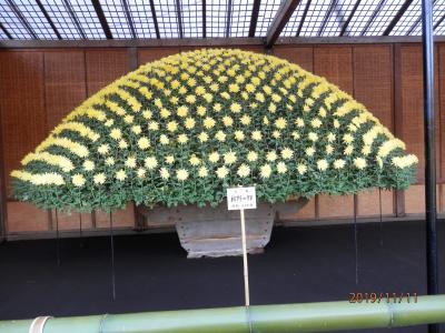 菊まつり巡り~新宿御苑編