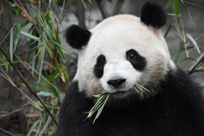 パンダ旅その1