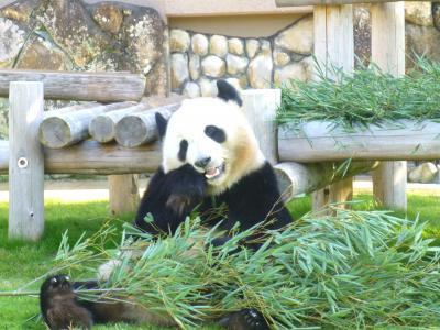 南紀白浜1・・パンダたちに会いにアドベンチャーワールドへ