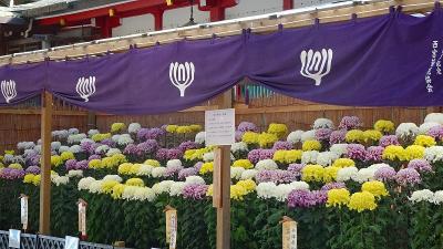 第43回 西宮市菊花展覧会 下巻。