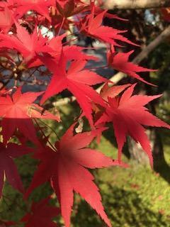 2018年 京都の紅葉