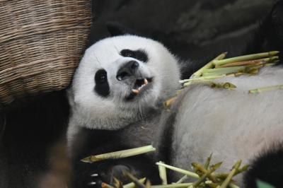 パンダ旅その2