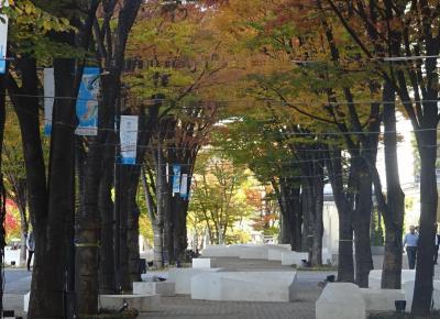 横浜みなとみらい 紅葉が始まった