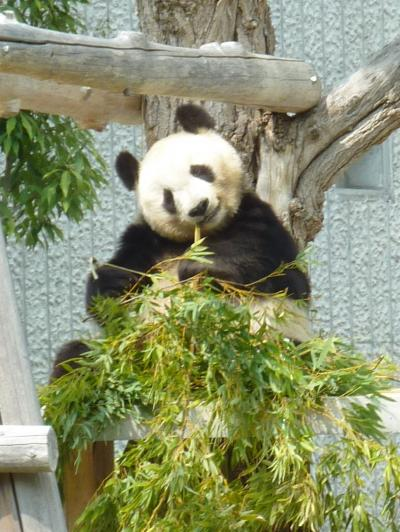 母娘旅 2013年GW in 神戸(王子動物園、北野、六甲山、キッザニア甲子園)