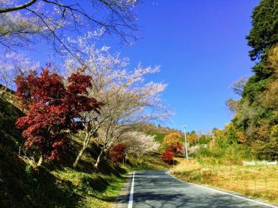 紅葉の香嵐渓と小原四季桜まつり ②