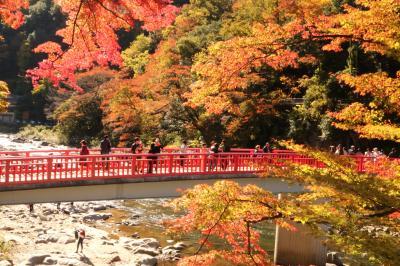 今年の紅葉は遅めですが 稲武大井平公園&足助城&猿まわしで楽しむ香嵐渓♪