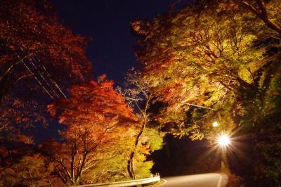 2019年、ちょこっとですが今年も吉野へ紅葉ライトアップへ+おまけ。家の近所の道の駅のライトアップ