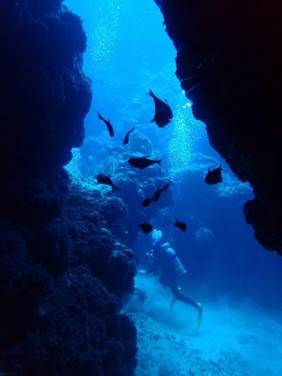 沖縄南部の糸満で久々のダイビング!