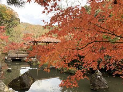 鳥取県南部町 新宮谷公園の紅葉