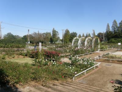 伊奈町町制施行記念公園・バラ園に訪れてみました
