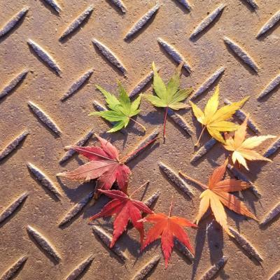 紅葉し始めた円良田湖(つぶらた湖)でワカサギ釣り☆埼玉県:寄居町