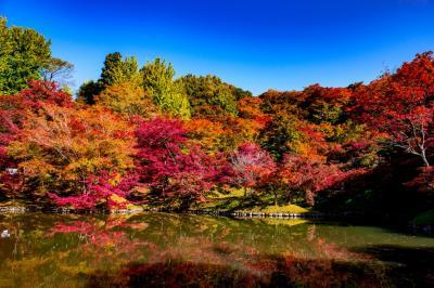 用作公園の紅葉 2019