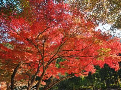 紅葉真っ盛り! のんびり歩く御岳山・御岳渓谷・鳩ノ巣渓谷