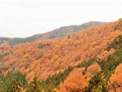 晩秋の志賀高原へ。④澗満滝を見てから標高の低いエリアに残っていた紅葉を楽しみました。