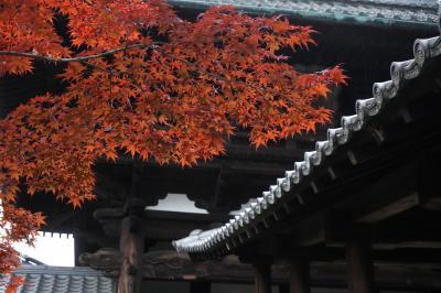東福寺の紅葉(No1)と雨の知恩院(No2)